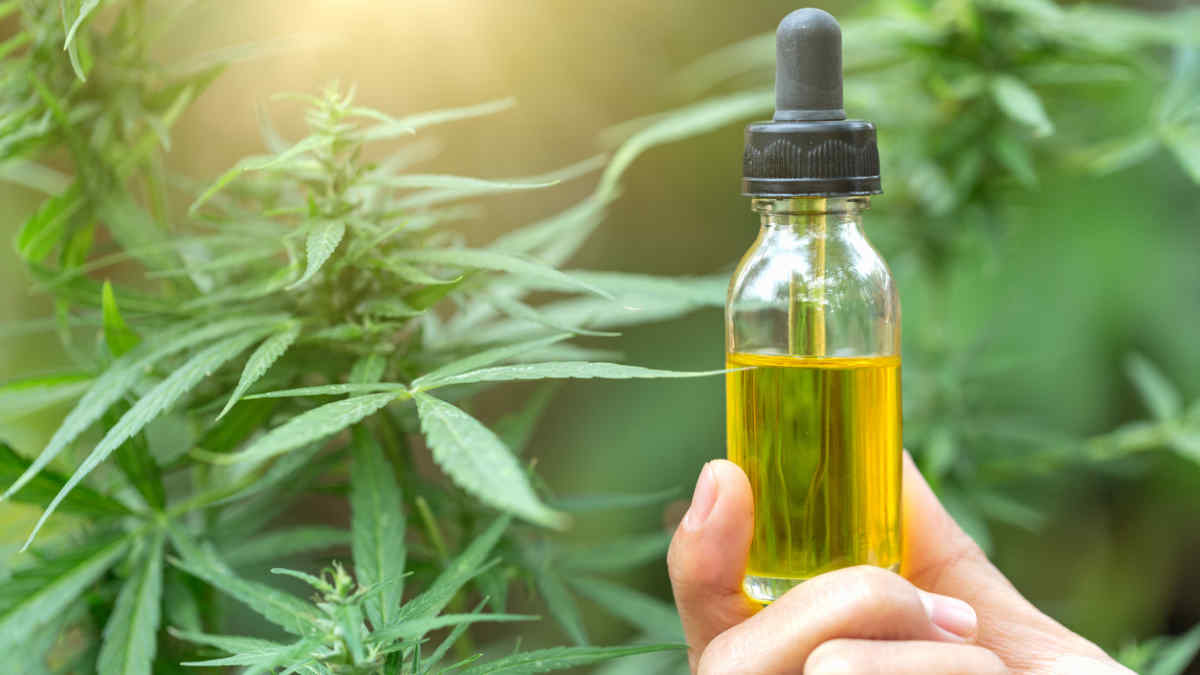 THC oil and the process of buying